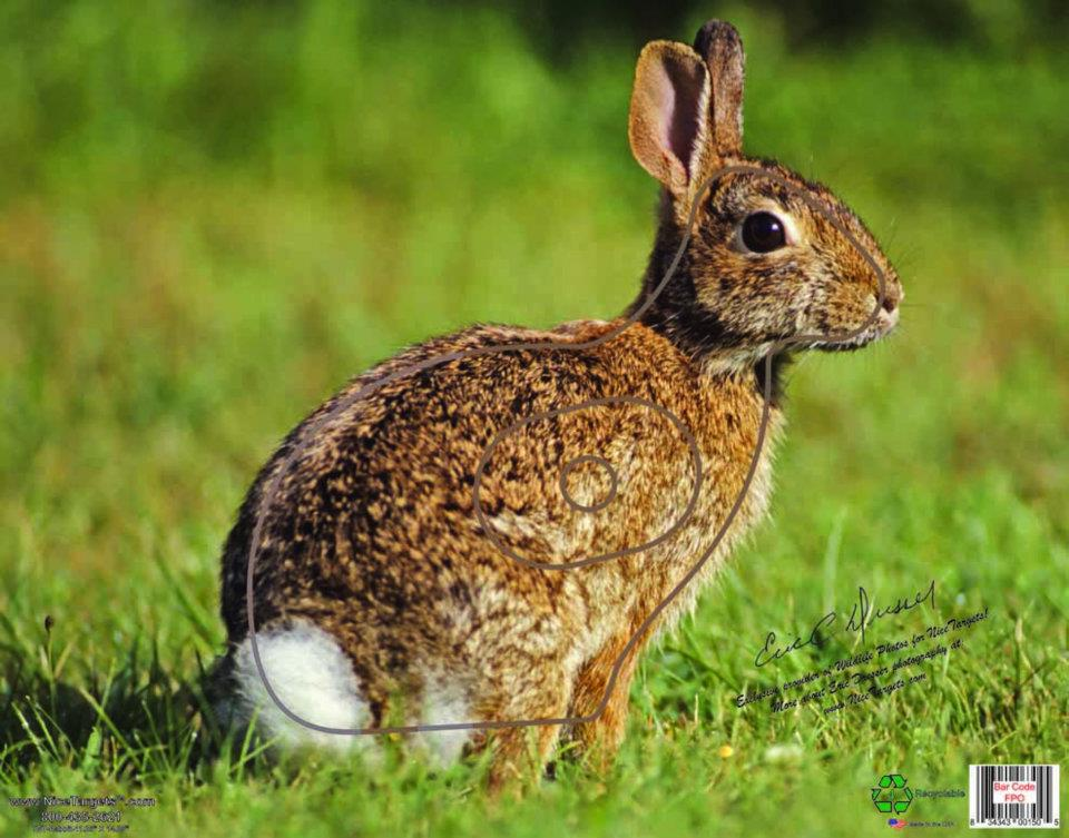 Detailed Rabbit Target Photo
