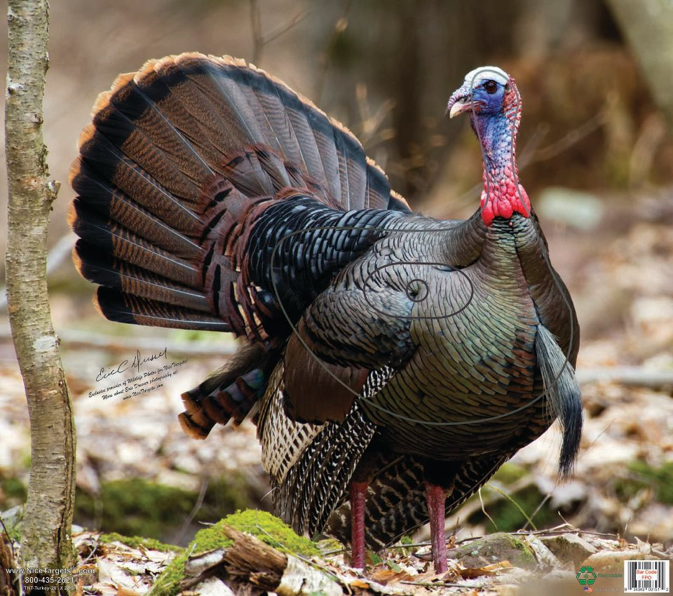 "Turkey 20"" x 22.5"" IN STOCK"
